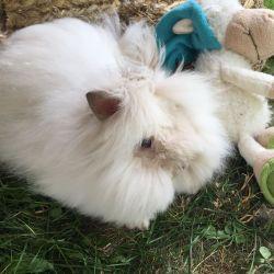 Původ Teddy králíčka