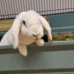 Nová kamarádka pro naše králíčky