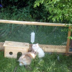 Pouštění králíčka ven z klece